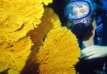 Diver with Yellow Gorgonian #2