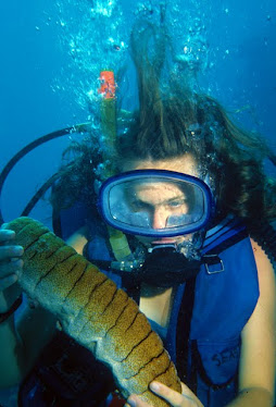 Diver with Leopard Sea Cucumber