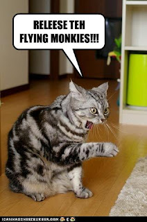 monkey cat the fly