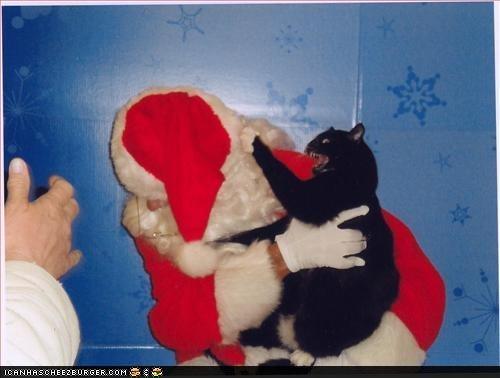 http://2.bp.blogspot.com/_0ppLhuA3OSo/TSFO0m932kI/AAAAAAAABb0/0oBmvxgR3Xs/s1600/cat+attacking+santa.jpg