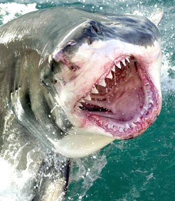 ...можно предотвратить нападение акул?