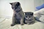 """""""Obcując z kotem, człowiek ryzykuje jedynie to, że stanie się wewnętrznie bogatszy."""" Colette"""