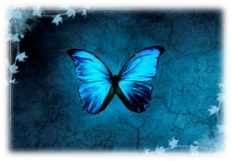 wallpaper blue butterfly. wallpaper blue butterfly. lue