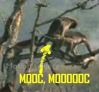 mono toca huevos