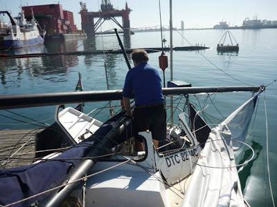 ballena rompe velero