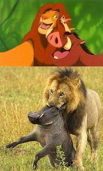 7 difrencia rey leon