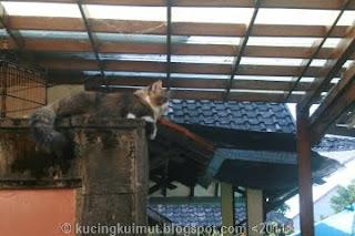 kucing melarikan diri