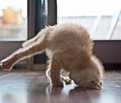 kucing pemanasan, aktifitas kucing