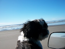 Sammy & I driving on the beach