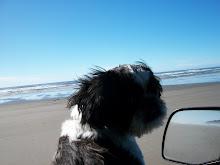 Sammy & I driving on the beach