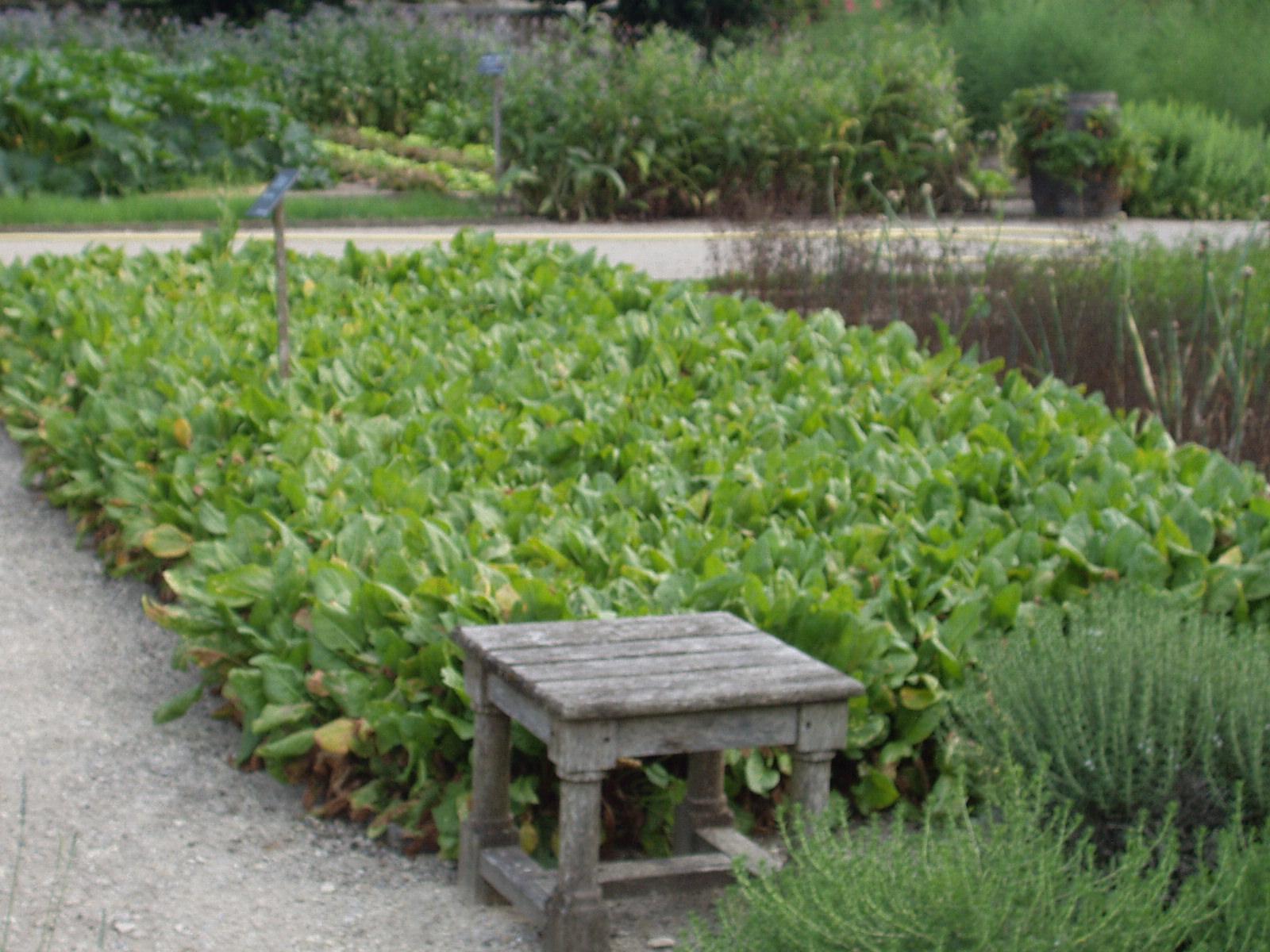 jardin au carré