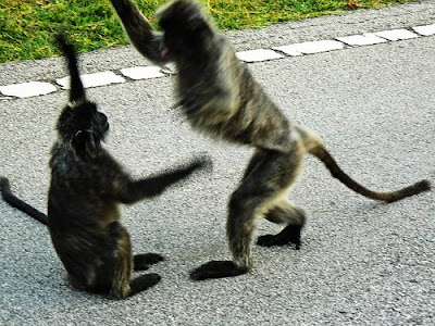 monkey hi five