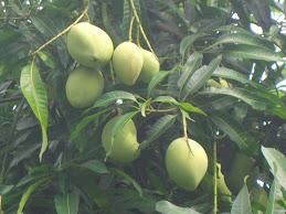 Green Mango