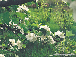 White Apple Flower