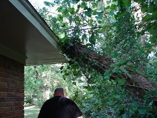 Tree on my wonderful groom's parents' house--fortunately looks like minimal damage