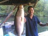 Akhirnya ajis dapat jugak ikan siakap besar.Bertahun tu nak dapat.....