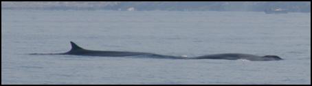 10 giugno 2007, le balene all'Elba