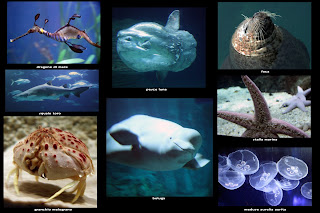 pesci e mammiferi marini