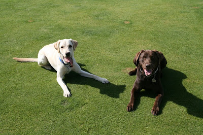 Buddy and Luey posing together, taking a break from playing