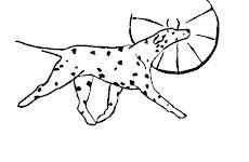 Blackthorn Dalmatians