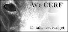 We CERF - Vi Øyelyser