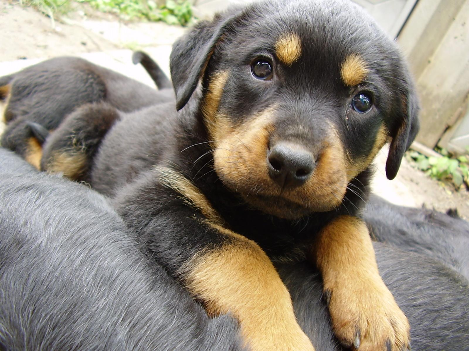 Los cachorros mas lindos!!