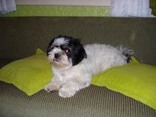 Liza(cachorrinha nº 1)