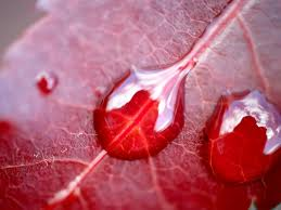 diaforetiko.gr : red+leave Κάθε ασθένεια περιέχει ένα κρυφό μήνυμα!