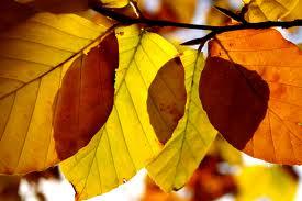diaforetiko.gr : yellow+leaves Κάθε ασθένεια περιέχει ένα κρυφό μήνυμα!