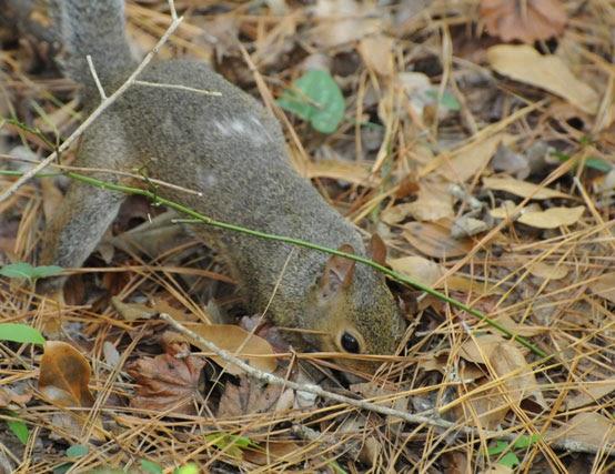 Audubon South Carolina Forest Builders