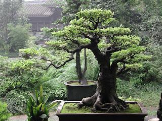ideias decoração mobiliário | poda bonsai