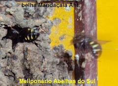 Ab. Mandaçaia