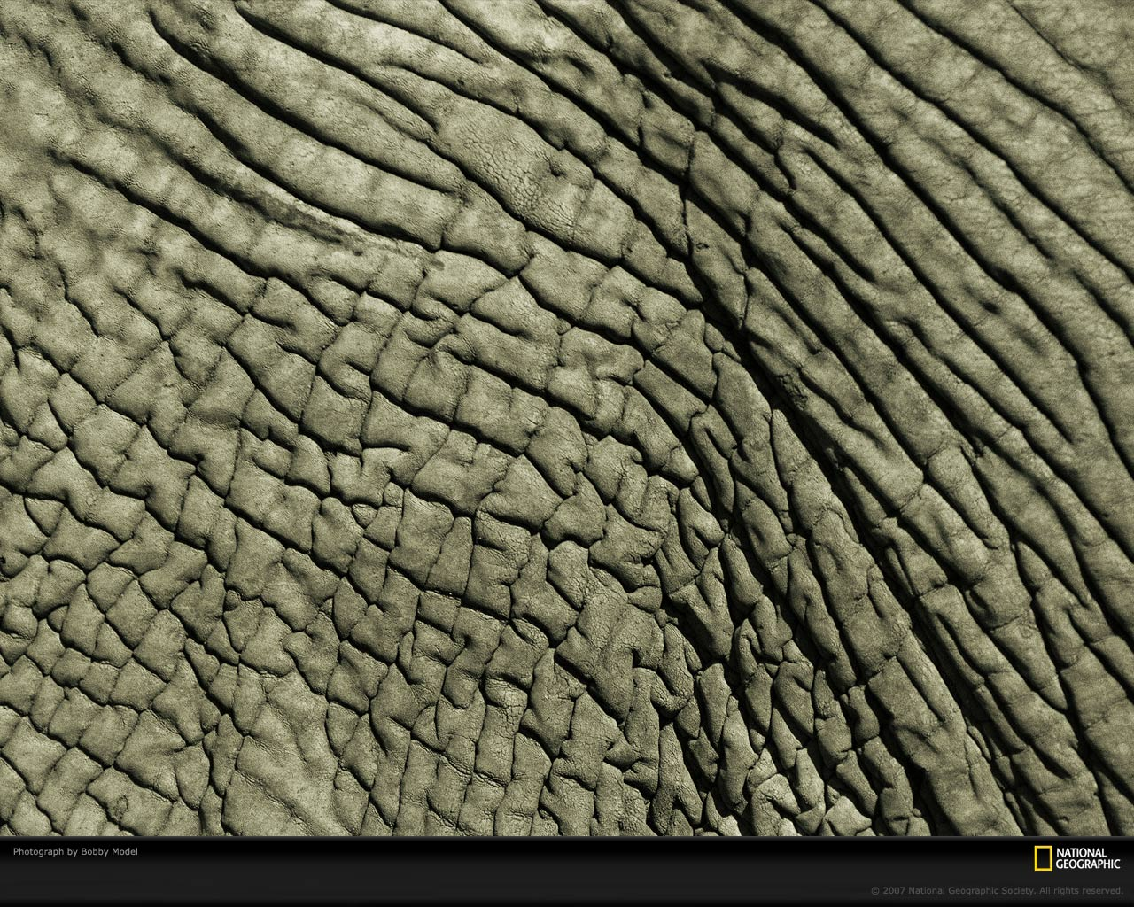 animal skin patterns - photo #11