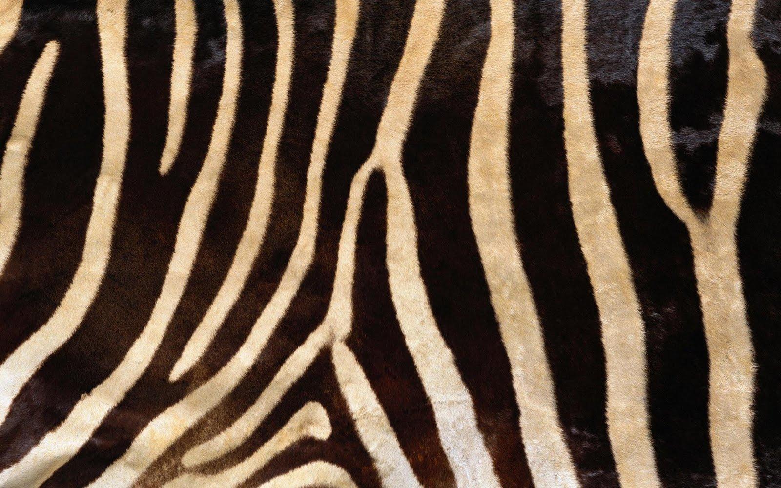Real zebra pattern - photo#9