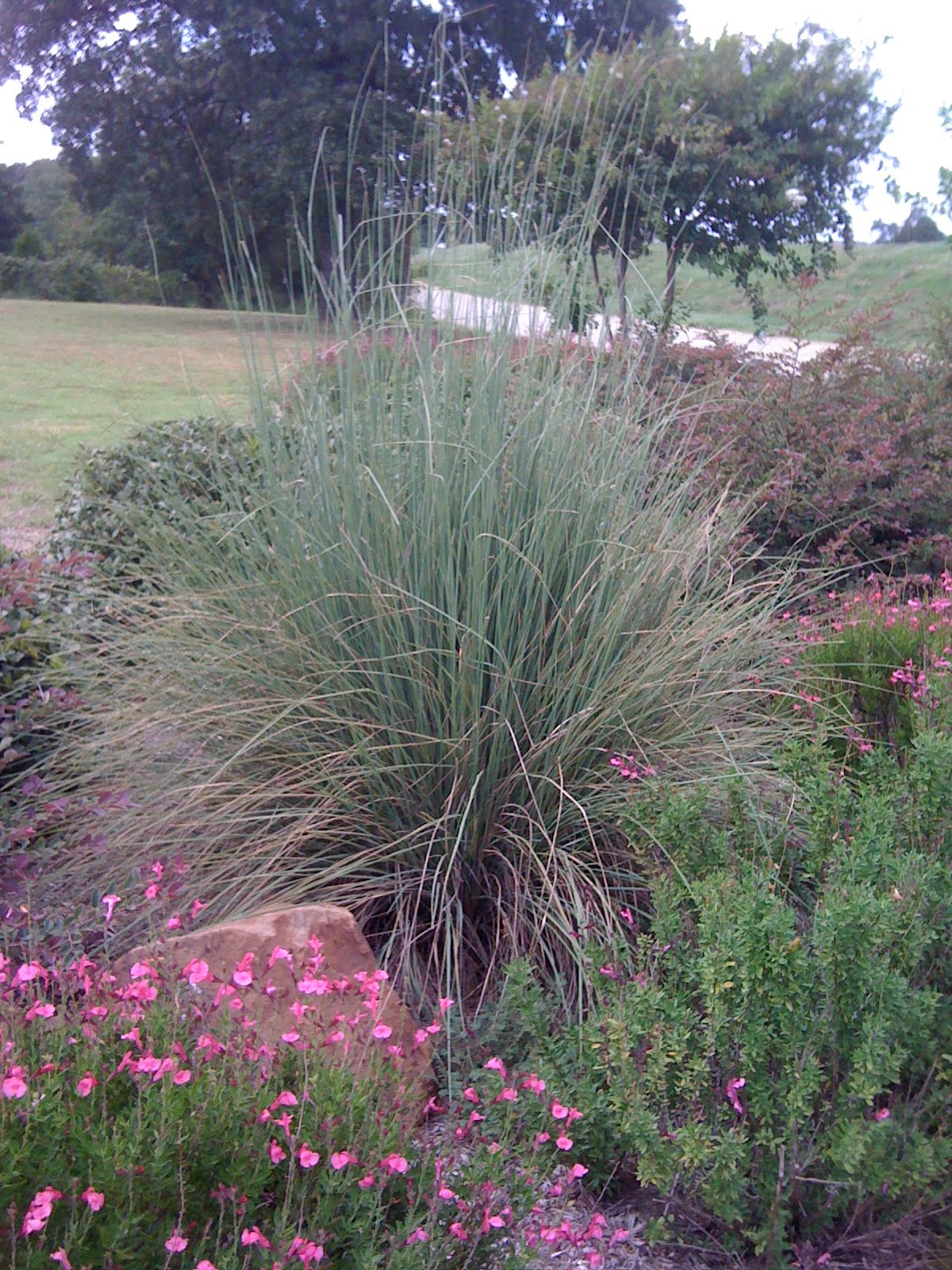 Signature gardens grasses not just for lawns anymore all of these ornamental grasses need 6 to 8 hours of full sun mightylinksfo Gallery