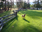 My good old pal Kirby in Montana. I love my dog!