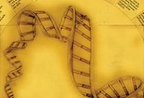 works::ADN Infográfico