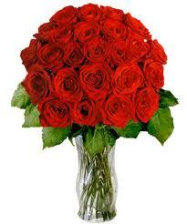 tollyupdate red rose