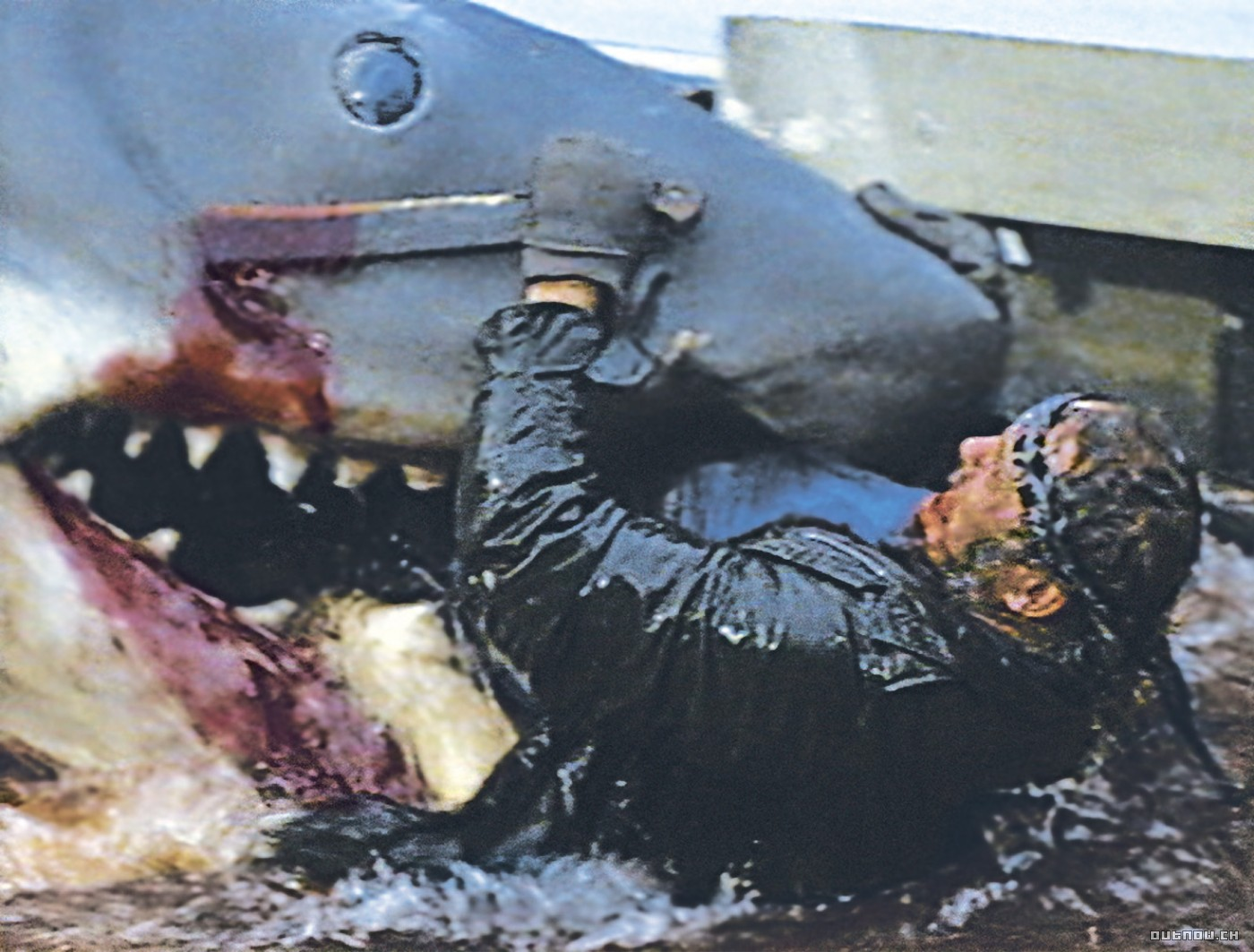 [jaws-robert-shaw22.jpg]