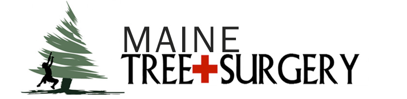 Maine Tree Surgery: Tree Care, Tree Removal, Tree Work, & Pruning