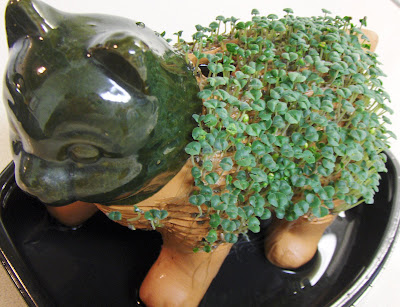 Betsy s herb garden a small bit of comic relief chia pet