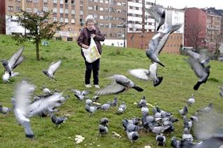 Samaritanos de los animales Lola+Soto+palomas