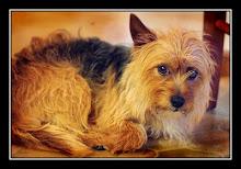 esse-my dog