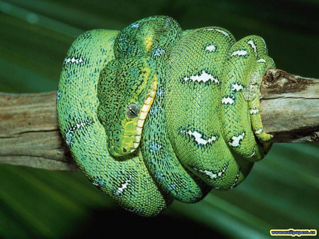 vida de la serpiente: