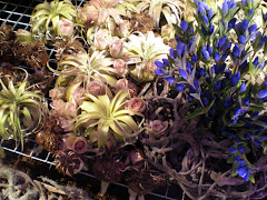 Philadelphia Flower Show 2009