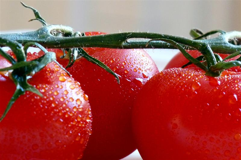 Campari Tomatoes