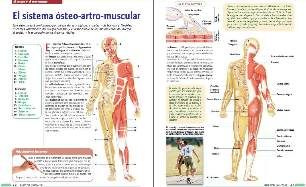 Moderno Descarga Gratuita Anatomía Y La Fisiología Pdf Elaboración ...