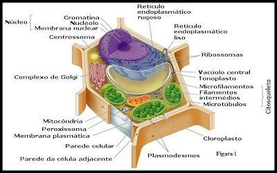 Imagens De Celulas Animais E Vegetais | artigo