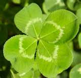4 Leaf Clover Count