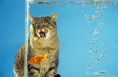 Pez y el gato